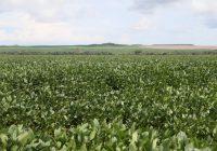 Líderes do agronegócio reagem após 'briga' de Weintraub com a China